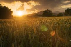 Goldene Felder Lizenzfreie Stockbilder