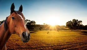 Goldene Felder stockfoto