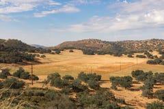 Goldene Felder, Buchweizen, Eichen, Donnerregenwolken stockfotografie