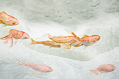 Goldene Fische Lizenzfreie Stockfotos