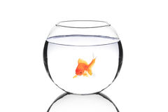 Goldene Fische in einer Schüssel Lizenzfreie Stockfotografie