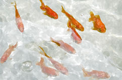 Goldene Fischkunst Stockfotos