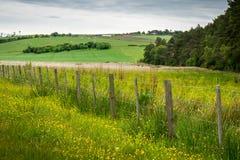 Goldene Gräser und Bauernhof-Zaun Stockfotos