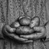 Goldene Hände der Kartoffel lizenzfreie stockfotografie