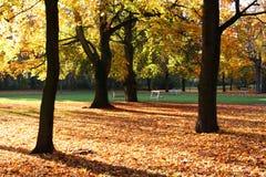 Goldene Herbstbäume Stockfoto