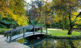 Goldene Herbstbäume stockfotos