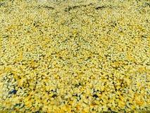 Goldene Herbstblätter stockbild