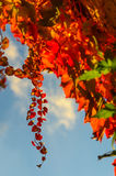 Goldene Herbstblätter Lizenzfreies Stockfoto