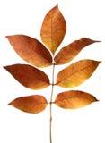 Goldene Herbstblätter Stockfotos
