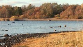 Goldene Herbstlandschaft stock video
