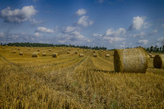 Goldene Heuballen in der polnischen Landschaft Stockfotografie