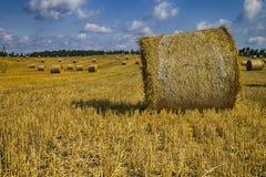 Goldene Heuballen in der polnischen Landschaft Stockbilder