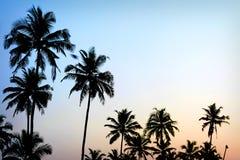 Goldene Hintergrundbeleuchtung des blauen Himmels des Palme-Sonnenuntergangs Lizenzfreies Stockbild