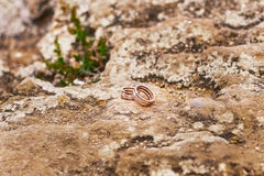Goldene Hochzeits-Ringe Lizenzfreie Stockfotografie