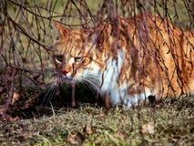 Goldene Katze stockfoto