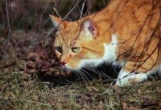 Goldene Katze stockfotos