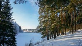 Goldene Kiefer auf den Banken des Flusses im Winter Lizenzfreie Stockfotografie