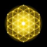 Goldene kosmische Blume des Lebens mit Sternen auf schwarzem Hintergrund Stockfoto