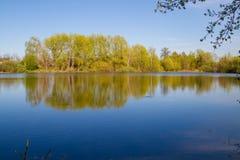 Goldene Kräuselungen im Wasser Stockfotos