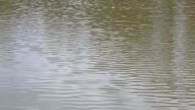 Goldene Kräuselungen im Wasser stock video