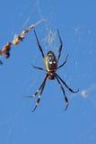 Goldene KugelWeb spider gegen blauen Himmel Lizenzfreie Stockfotografie