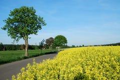 Goldene Landschaft Stockfoto
