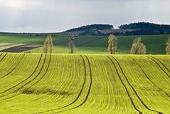 Goldene Landschaft Lizenzfreie Stockbilder