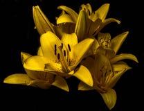 Goldene Lilien stockfotografie