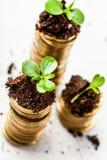 Goldene Münzen im Boden mit Jungpflanze Stockfotografie