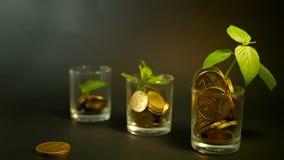 Goldene Münzen im Glas- und grünen Blatt des Sprösslings auf schwarzem Hintergrund Erfolg des Finanzgeschäfts, Investition, Ideen stock video