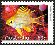 Goldene Maid-australische Briefmarke Lizenzfreie Stockfotografie