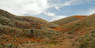 Goldene Mohnblumen Kaliforniens in der hohen Wüste von Süd-Kalifornien Lizenzfreie Stockfotos