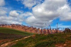 Goldene Mohnblumen Kaliforniens in der Weinanbaugebiet-Landschaft Paso Robles Kalifornien lizenzfreie stockfotografie