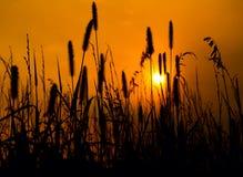 Goldene Nächte auf dem Grasland Stockfotografie