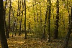 Goldene Oktober Stockbilder