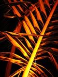 Goldene Palmen Lizenzfreie Stockbilder