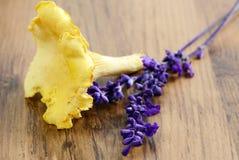 Goldene Pfifferlingspilze mit weiser Blume Lizenzfreies Stockbild