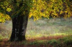 Goldene Reflexion des Baums verlässt im Sonnenlicht stockfotografie
