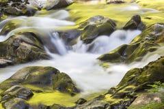 Goldene Reflexionen in Sol Duc River lizenzfreies stockbild