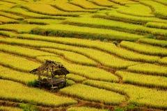 Goldene Reisfelder im Norden von Thailand Lizenzfreie Stockfotos