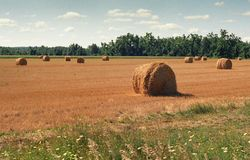 Goldene runde Heuschober in der Weide Stockfoto