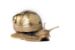 Goldene Schnecke Stockbild