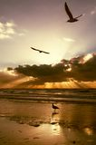 Goldene Sonnenuntergangfarben Stockbild
