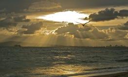 Goldene Strahlen über dem Pazifischen Ozean nach dem Sturm Stockfotografie
