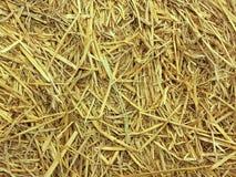 Goldene Strohbeschaffenheit stockbilder