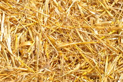 Goldene Strohbeschaffenheit Lizenzfreie Stockfotografie