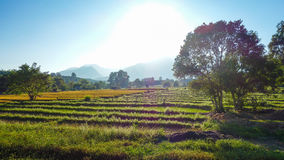 Goldene Stunde über Erntefeldern in Pai, Thailand Lizenzfreies Stockfoto