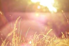 Goldene Stunde stockfotos