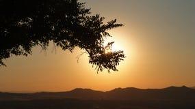 Goldene Stunde in Anatolien in der Türkei mit dem slhouette eines Laubbaumes vor der niedrigen Sonne lizenzfreies stockfoto