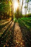 Goldene Stunde des Waldsonnenuntergangs stockfotos